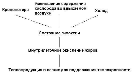 Рис. 9. Схема легочного термогенеза по К.С. Тринчеру (1991)